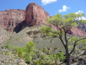 Grand Canyon Trees, 3 trillion trees on earth